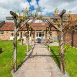 Grapevines in the Foldyard garden