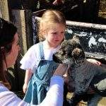 little girl petting a lamb