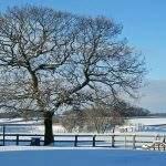 snow at broadgate farm